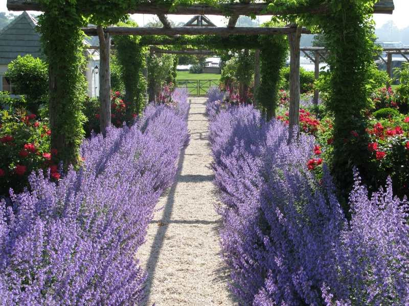 Lavendel und Kies.jpg