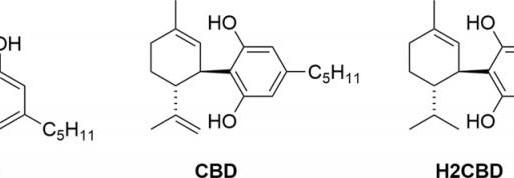 Synthetisches CBD wirkt bei Krampfanfällen von Ratten