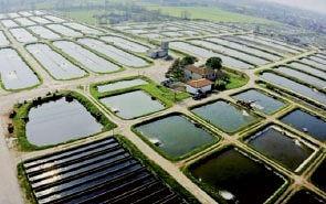 bassins d'élevage d'esturgeons