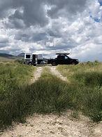 Armadillo-grey on grassy road.jpg