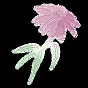 10_Echinacea Kopie.png
