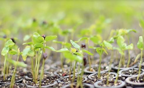 Processos sustentáveis de alimentos