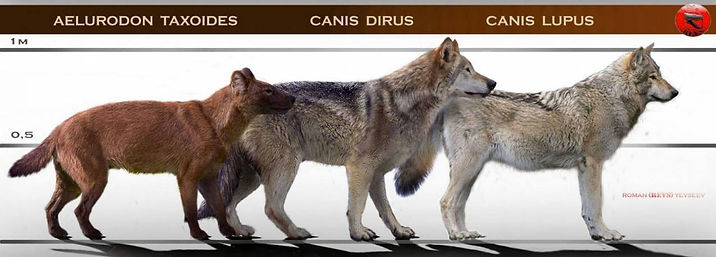 Dire Wolf Pictures.jpg
