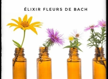 🌺Les fleurs de Bach
