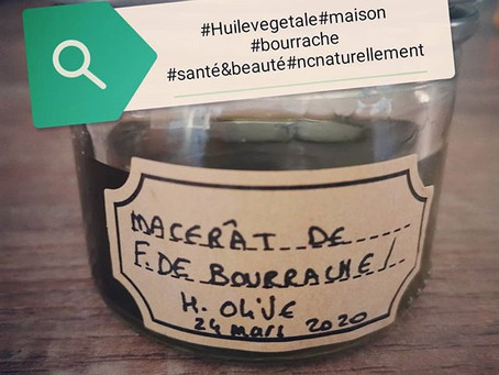 Fabrication de macérât à la Bourrache