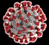coronavirus_PNG93664 (2).png