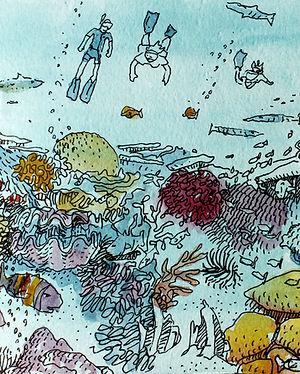 _ Australia _ Great Barreer Reef _ Baril