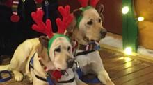 Holiday Companions