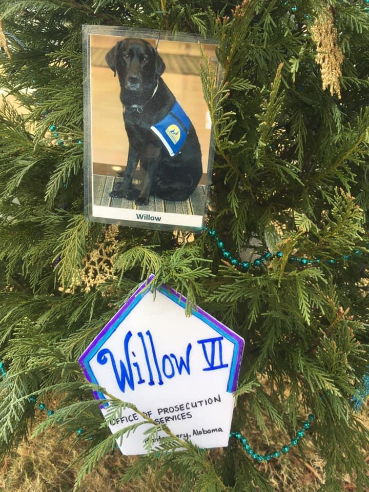 Willow VI