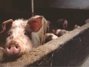 The Holocaust Of Non-Human Animals