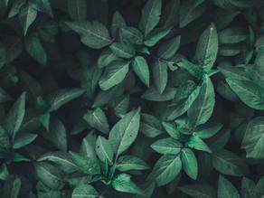 Hedgerows Could Help Towards Carbon Net-Zero Target