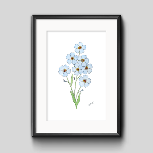 Forget Me Not Watercolor Painting - Unframed Print