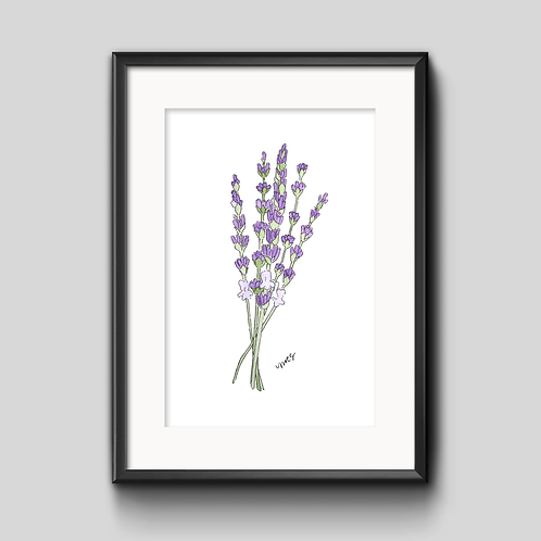Lavender Watercolor Painting - Unframed Print