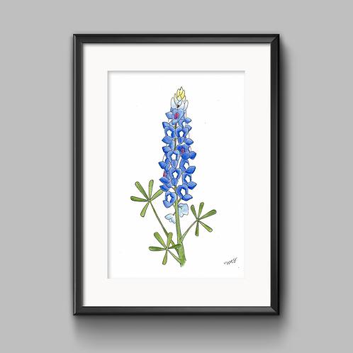 Bluebonnet Watercolor Painting - Unframed Print