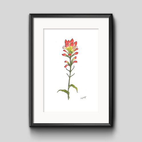 Indian Paintbrush Watercolor Painting - Unframed Print