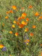 Yosemite Yoga Wilderness Backpacking Retreat with Anna Landauer
