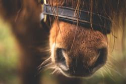 Pferdepraxis Zillertal