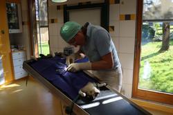 Kastration Tierarzt Fügen