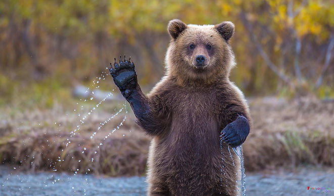 waving bear.jpeg