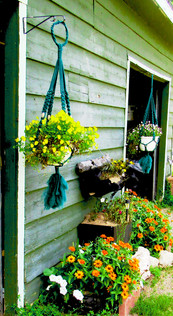 Outdoor Macrame Plant Hangers On The Side Of The House
