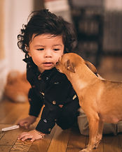 dog-looking-at-toddler-1868479.jpg