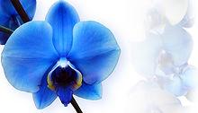 orchid-673702_960_720.jpg