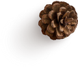 pinecone-1.png