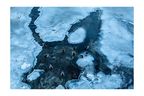 Ducks, blue waters and ice