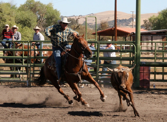 Local Rodeo at the Fairgrounds