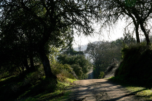 Our road through the live oaks