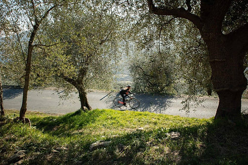 Escaping the heat among the olive groves - Italian Riviera, Alassio