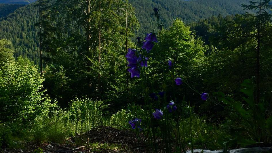 Little trek in the mountains