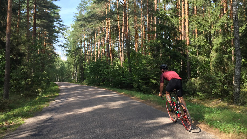 Forest in Mazury