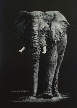 Henry - elephant