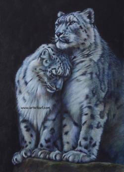 Tenderness - snow leopards