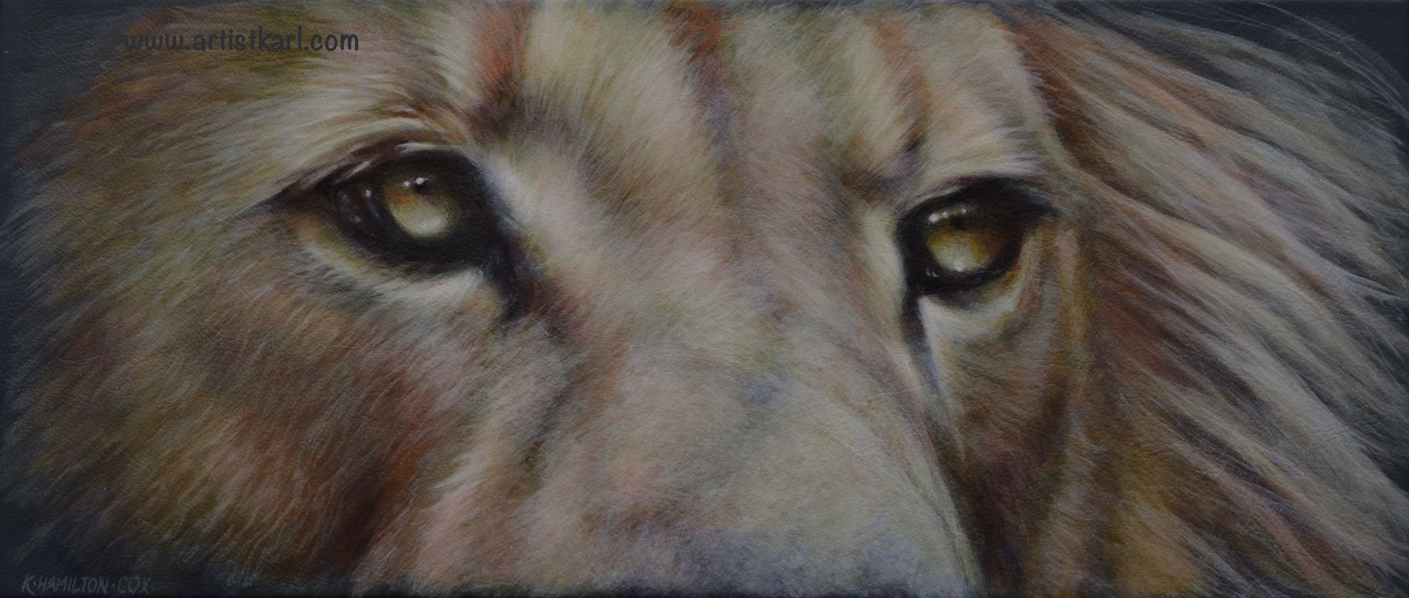 Cats Eyes Series - lion