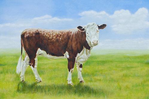Hereford Bull (Calf) Oil painting