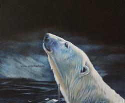 Moonlight Swim - polar bear