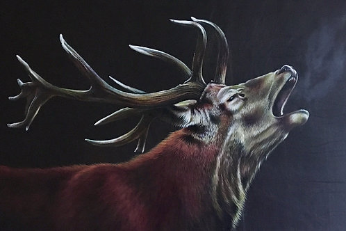 The Calling red deer stag