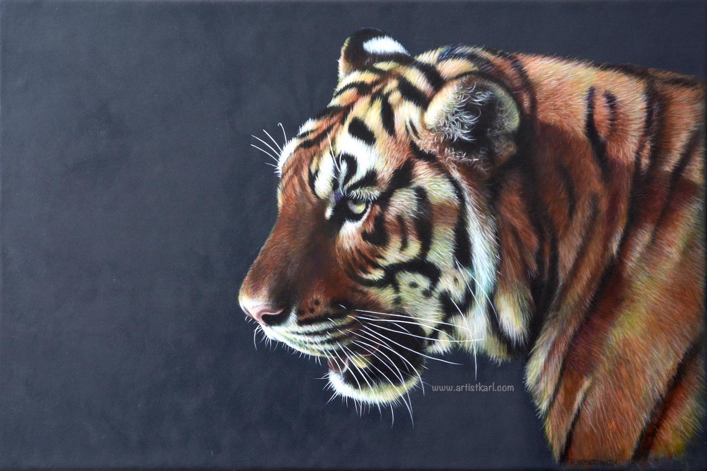 Evening Sun - tiger