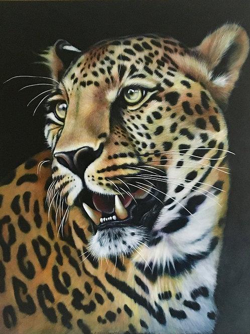 Leopard Gazing
