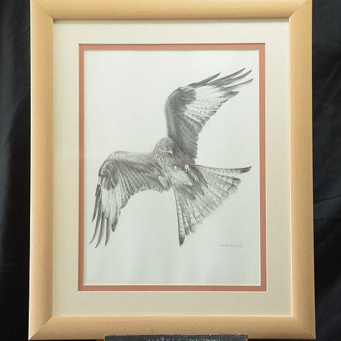 Kite in Flight