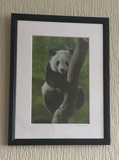 Tree Hugger panda signed mounted print framed