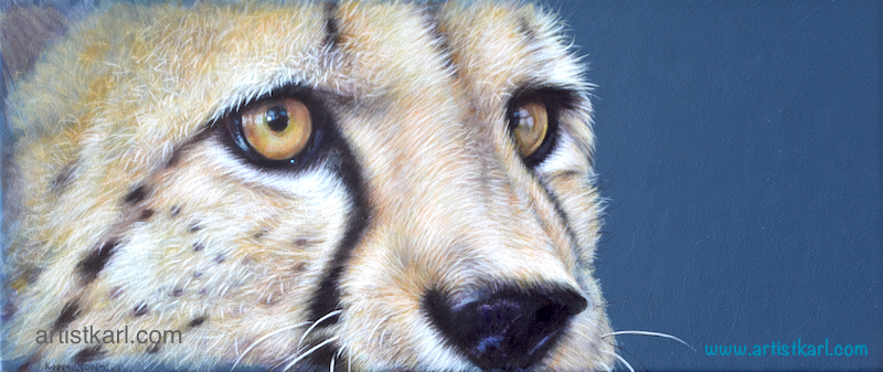 Cats Eyes Series - Cheetah
