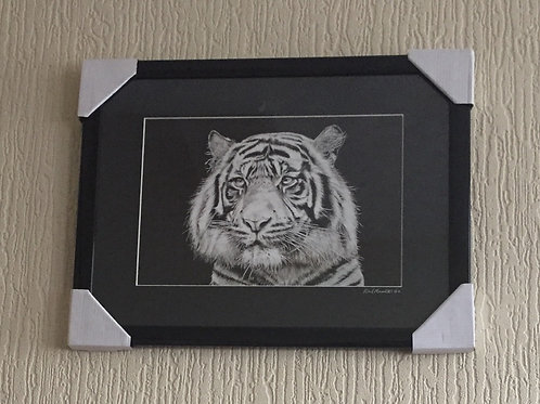 Tiger Watching framed mounted signed print