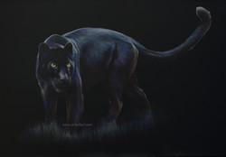 Night Hunter - black leopard