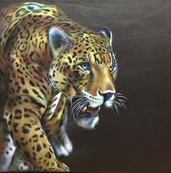 Focussed- jaguar