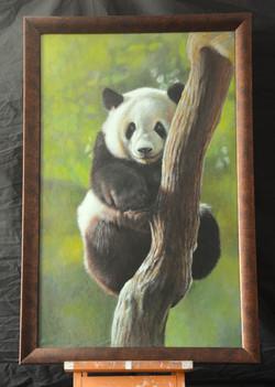 Tree Hugger - panda