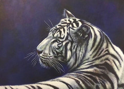 Eye Catching - Tiger