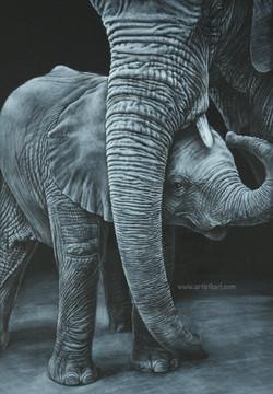 Pride & Joy - elephants